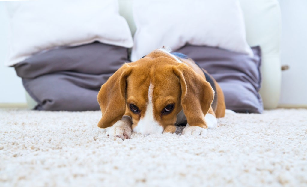 9 Signs You Need Help With carpet cleaning services birmingham al iStock-504378134-1-1-1024x624